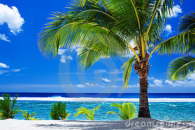 Single palm tree overlooking amazing lagoon