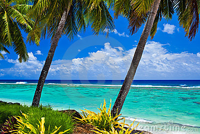 Single palm tree overlooking amazing lagoon