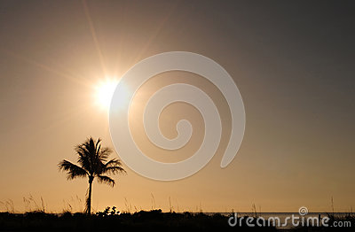 Single palm tree and sunrise