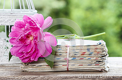 Single pink peony flower on stack of letters