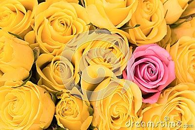 Single pink rose inside