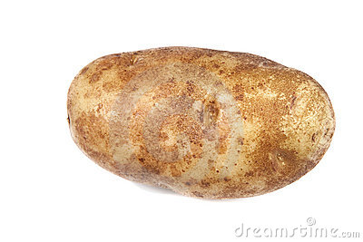 single potato over white