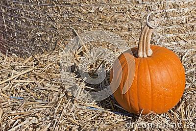 Single pumpkin on a hay field