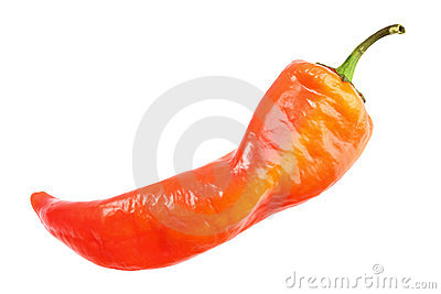 Single red fresh chilli-pepper