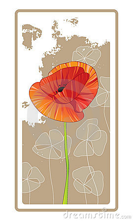 Single Red Orange Poppy