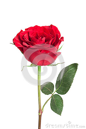 Free Single Red Rose Stock Images - 34215564