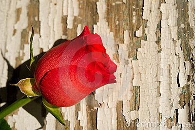 Single Red Rose on Rustic Background