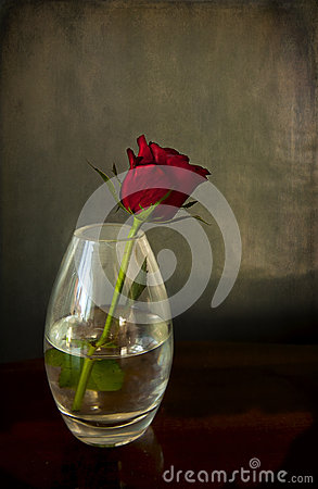 Single Red Rose In A Vase Stock Photos Image 24740073