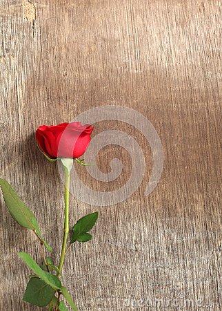 Single red rose on wooden background