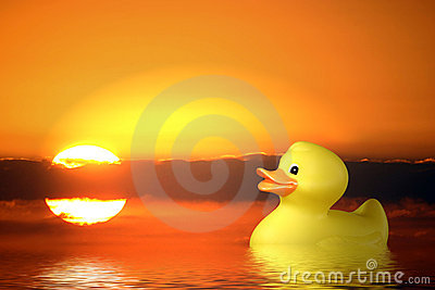 Single Rubber Duck at Sunrise Swimming in Pond