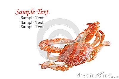 Single sear orange crab.