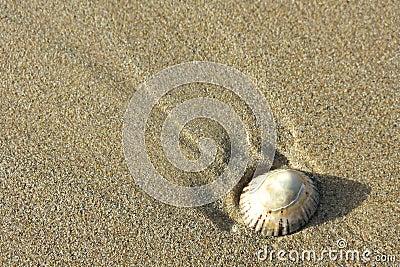 Single shell on sand