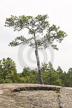 Lone pine single women