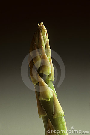Single Spear of Asparagus