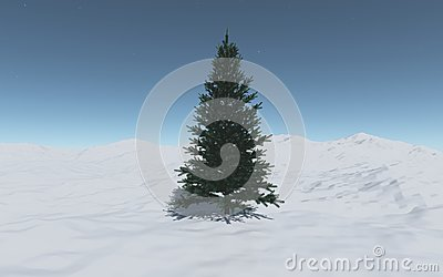 A single  spruce among the snow hills