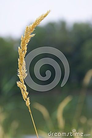 Single stalk