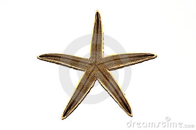 Single Starfish  On White