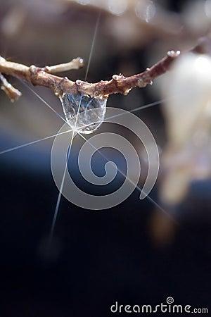Single starlit drop on branch