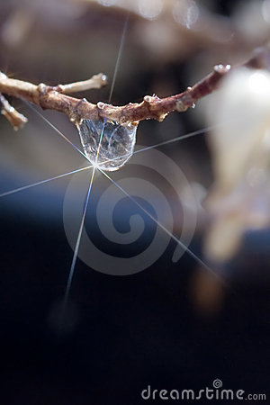 Free Single Starlit Drop On Branch Stock Photo - 5877650