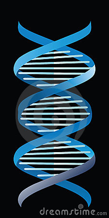 Single strand of DNA
