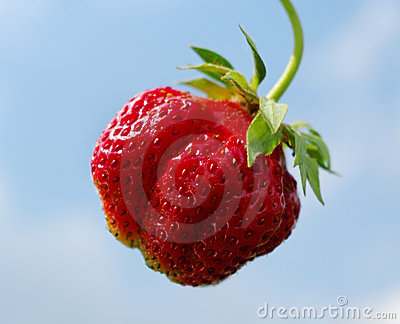 Single strawberry.