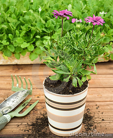 Single Striped Ceramic Flower Pot