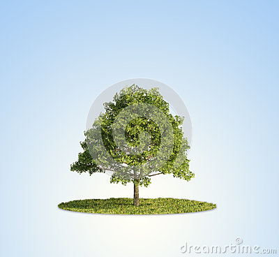 Single Tree Stock Photos - Image: 24942173