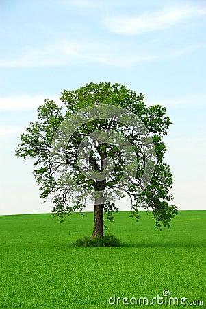 Free Single Tree Stock Photos - 894833