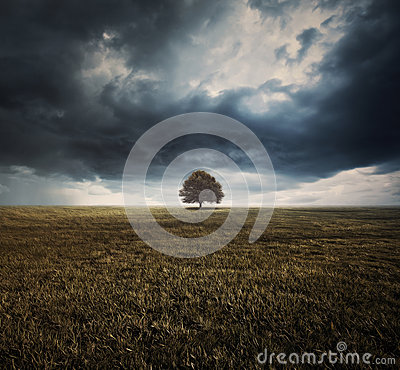 Free Single Tree And Storm Clouds Royalty Free Stock Photos - 38989058
