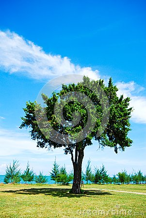 Single tree on green grass with blue sky
