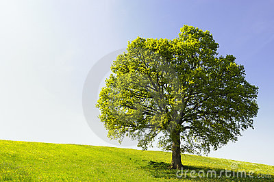 Single Tree on Hill