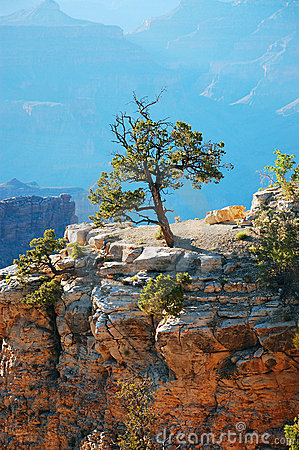 Free Single Tree In The Grand Canyon Stock Image - 14927151