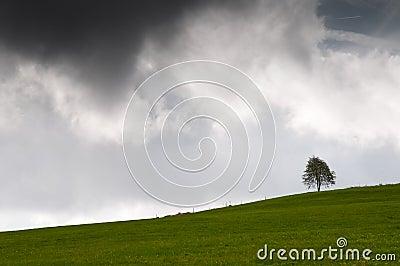 Single tree on a meadow with a dark sky