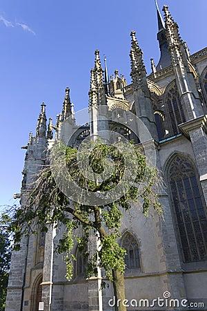 Single tree next to St. Barbaras Church