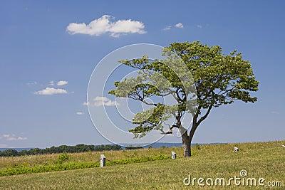 Single Tree in Open Field