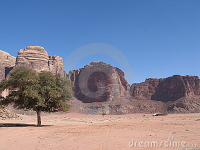Single tree and road wadi rum