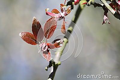 Single tree s blooming brown leaves.