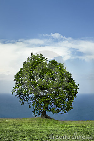 Single Tree and The Sea