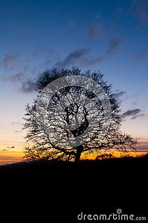 Single tree silhouette at sunset