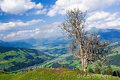 Single tree and Tirol landscape