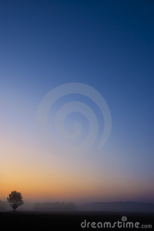 Single tree with vibrant blue orange sunrise sky