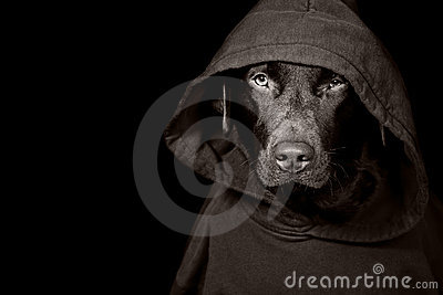 Sinister Looking Dog in Hooded Top