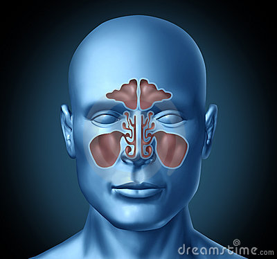 Free Sinus Human Nasal Cavity With Human Head Stock Image - 20046821