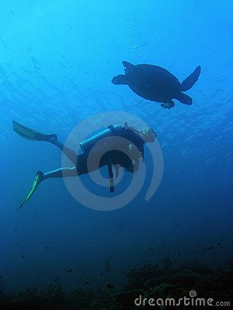 Sipadan Turtle scuba diver underwater borneo