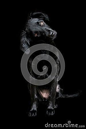 Black dog on dark background