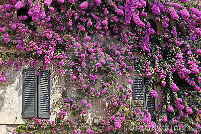 Sirmione, italian house with bougainvillea