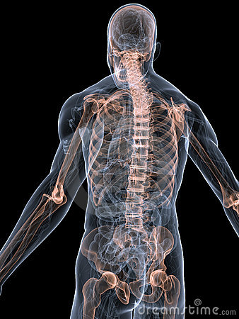 Cambiamento di compressione di spine dorsali del reparto 5 6 di petto