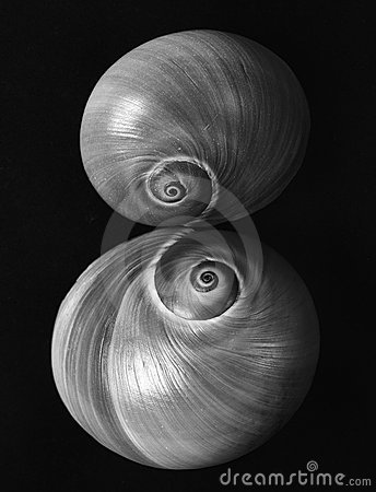Sister shells