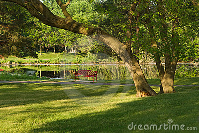 Sitting Bench at a Pond