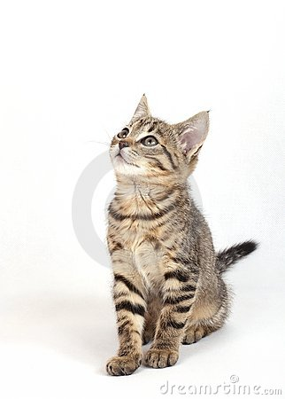 Free Sitting Cat Stock Photography - 11019862